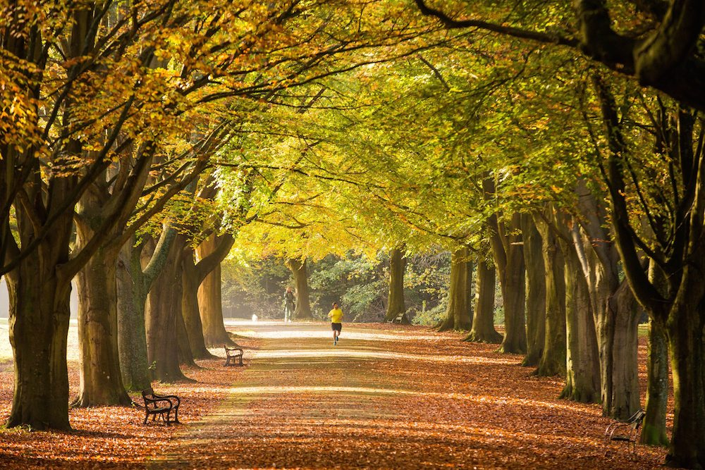 People run through an autumnal avenue in Bristol. 01 November 2015.