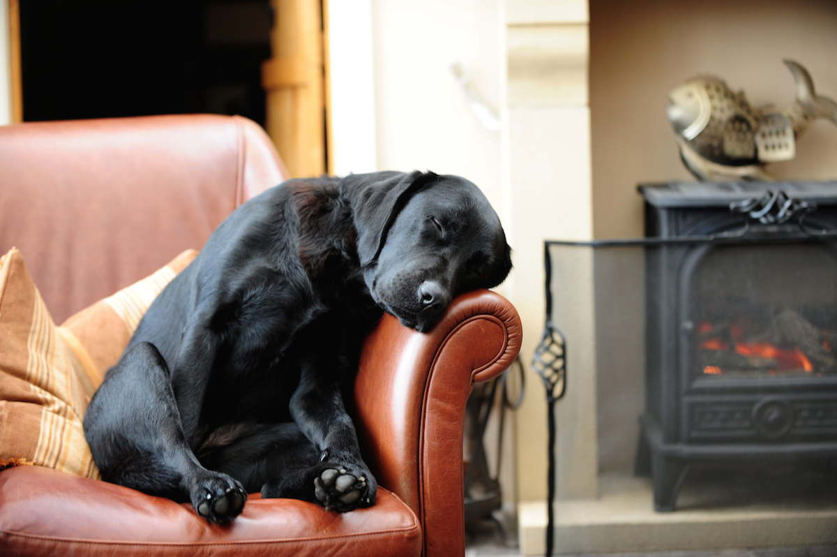 "SWNS Pictures of the Year 2015 - One hundred of the most compelling images on the SWNS wire this year as chosen by our picture editors. The sleeping labrador Dilly - this picture shot Villager Jim to fame after it ""broke"" the internet. See Ross Parry copy RPYBOOK. This incredible collection of heartwarming countryside images showcase the rags to riches story of a photographer who shot to fame, and has now released a book. The book features the best of the Derbyshire Peak District including landscapes, wildlife and country lanes. Villager Jim, who took the fantastic pictures is known as the banksy of the photography world as his identity is still unknown. The book is released today (Thurs)."
