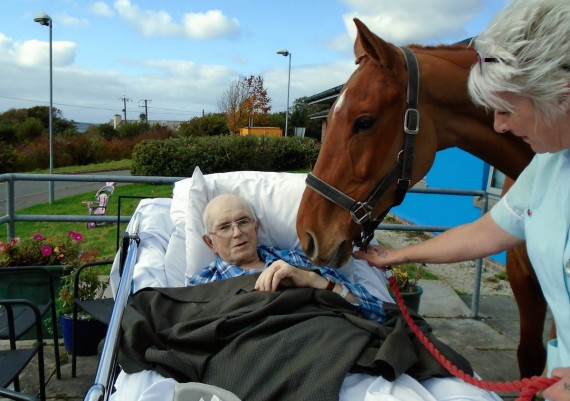 Horse wisperer