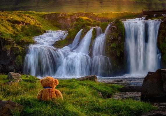 Iceland Teddy
