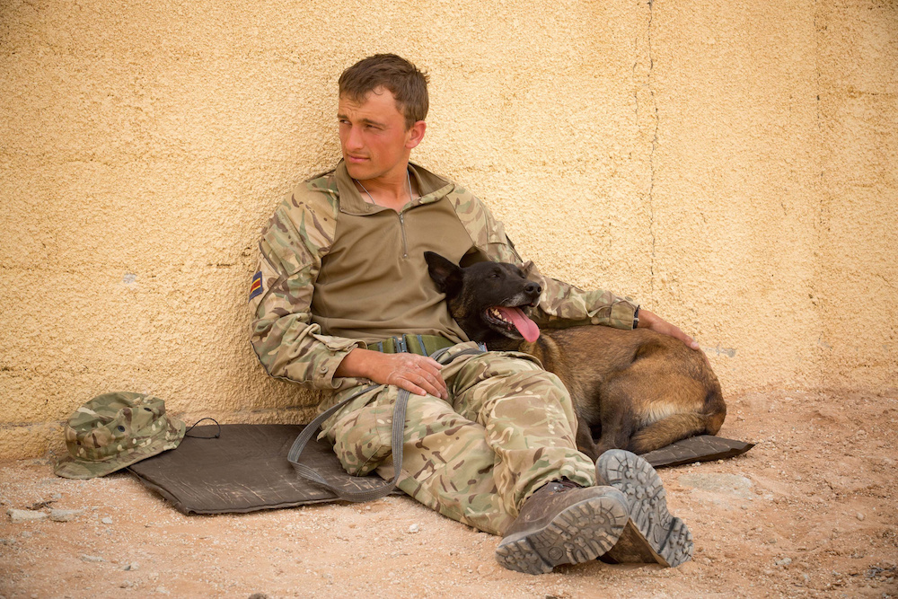 Military working dogs and soldiers on exercise in the Jordanian desert. The British Army is currently staging its biggest overseas military training exercise in more than 15 years. See SWNS story SWMUTTS; One of the British Army's oldest working dogs has donned goggles and boots for the largest military exercise in a DECADE - as it trains to support our troops on the front line. Seven-year-old Scooby the springer spaniel is one of 35 hero working dogs currently taking part in Exercise Shamal Storm, the biggest military training exercise in a decade. The clever canine, who has been working for five years, completed a tour of Afghanistan in 2012 as a search dog, who is trained to sniff out explosives in vehicles and luggage. Alongside 1,600 soldiers and 314 vehicles, Scooby has gathered with his handler,  Private Megan Cropper, in Jordan for a three-month training exercise. It is to test whether the Armed Forces could successfully mobilise in the event of a full-scale operation.