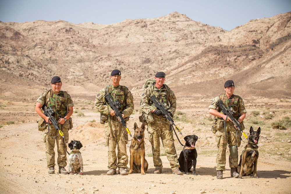 L to R: Private Carys Evans, with MWD Molly, Corporal Paul Langwell, with MWD Duke, Corporal Stuart Watson, with MWD Lightning, and Private Katrina Lynas, with MWD Hagen. They form part of the Military Working Dog unit out in Jordan on Exercise Shamal Storm. See SWNS story SWMUTTS; One of the British Army's oldest working dogs has donned goggles and boots for the largest military exercise in a DECADE - as it trains to support our troops on the front line. Seven-year-old Scooby the springer spaniel is one of 35 hero working dogs currently taking part in Exercise Shamal Storm, the biggest military training exercise in a decade. The clever canine, who has been working for five years, completed a tour of Afghanistan in 2012 as a search dog, who is trained to sniff out explosives in vehicles and luggage. Alongside 1,600 soldiers and 314 vehicles, Scooby has gathered with his handler, Private Megan Cropper, in Jordan for a three-month training exercise. It is to test whether the Armed Forces could successfully mobilise in the event of a full-scale operation.